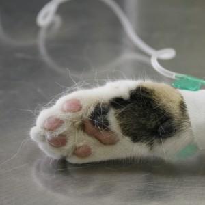 Emergenza veterinaria